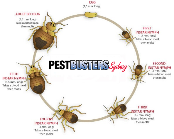 bedbug pest control sydney