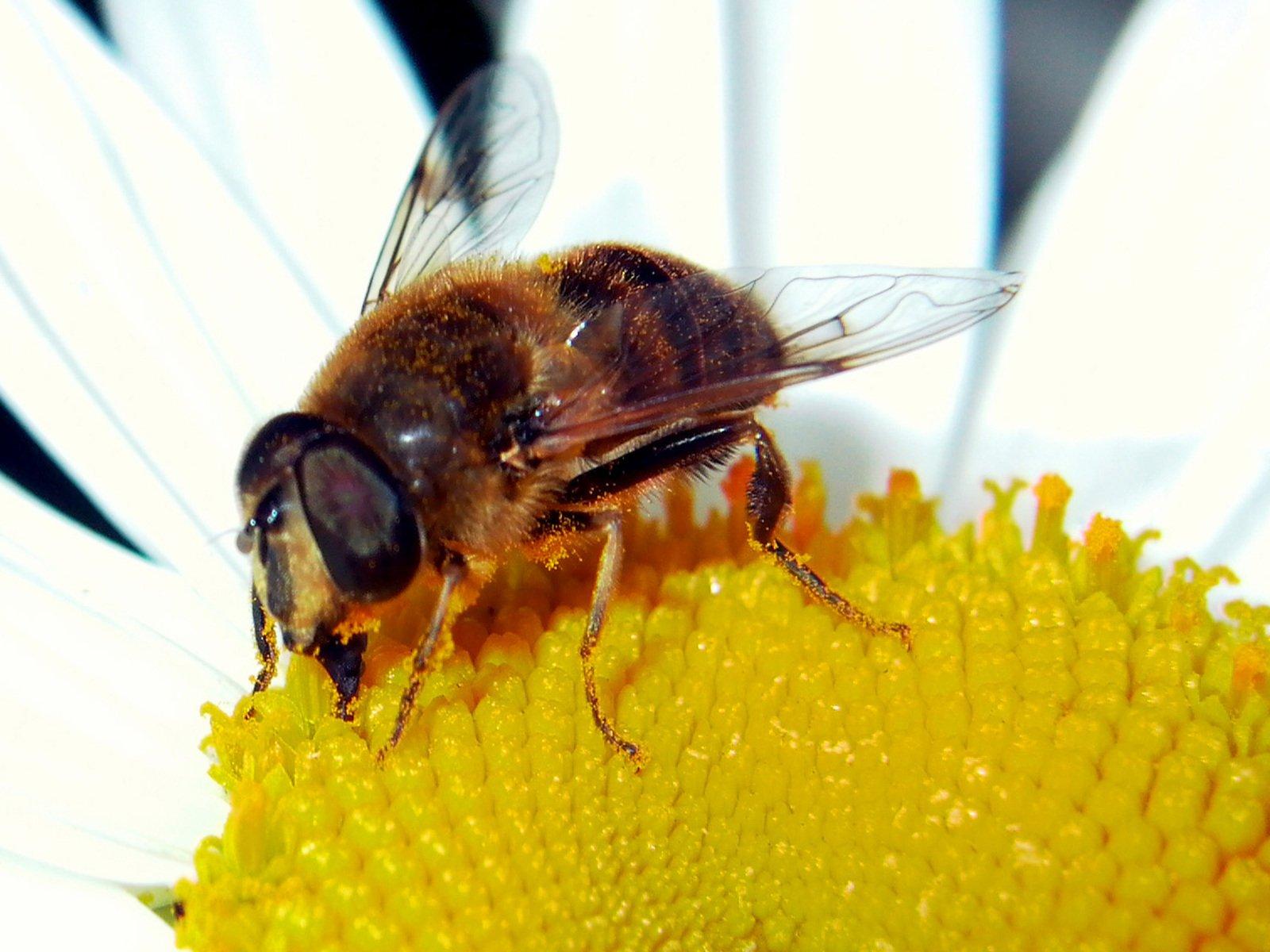 Pest Control Tips Sydney