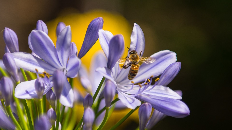 bee and wasp pest control Sydney