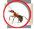 Sydney Pest Control